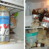 Những điều cấm kỵ cần phải tránh khi sử dụng tủ lạnh